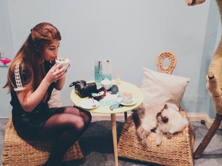 Cat-cafe-edinburgh