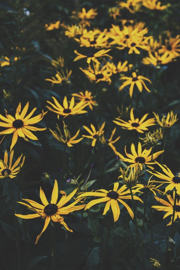 botanic-gardens-edinburgh-flowers