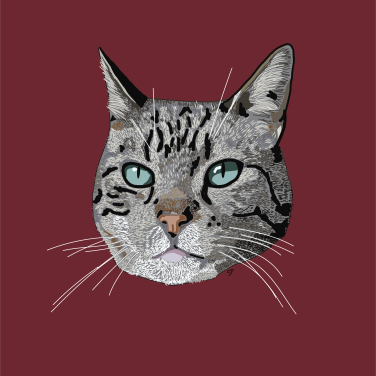 Illustration of a grey tabby cat